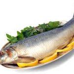 ماهی جنوب خلیج فارس