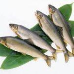 ماهی جنوب بدون تیغ