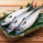 ماهی حلوا سفید جنوب