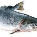 خرید جزئی ماهی آزاد جنوب