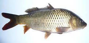 شرکت عرضه ماهی جنوب سنگسر