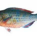لیست قیمت ماهی جنوب شیر