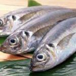 خریدار ماهی جنوب حلوا